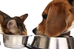 Dog and cat eating in mud room