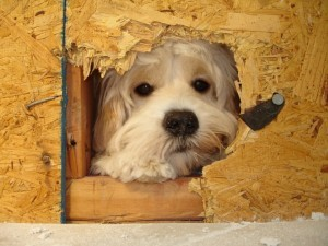 Buddy the Project Manager for Design Build Planners
