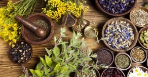 Organic Herbs ~ Organic Garden Gurlz Fort Wayne Indiana (3)