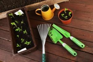 watering container plants - Organic Gurlz Gardens