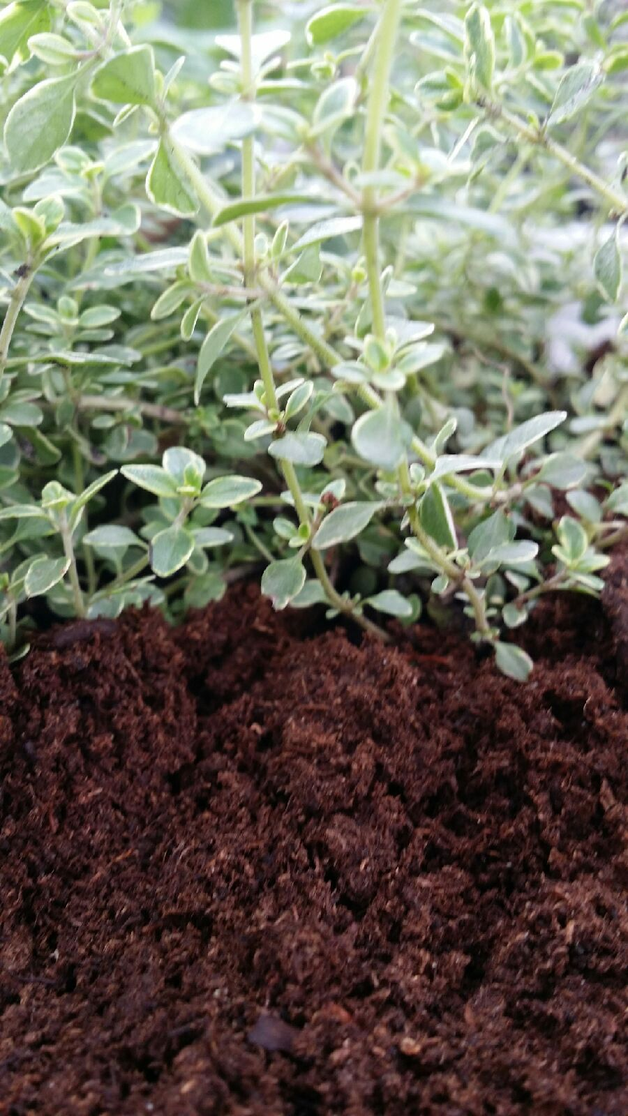 How to do an organic soil test at home design build pros for Organic soil