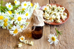 German chamomile as an herbal remedy for heartburn ~ Organic Gurlz Gardens