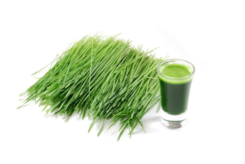 Health Benefits Of Lemongrass And Wheatgrass Design Build Planners