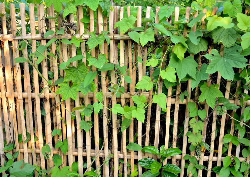 How To Plant And Create A Bamboo Fence
